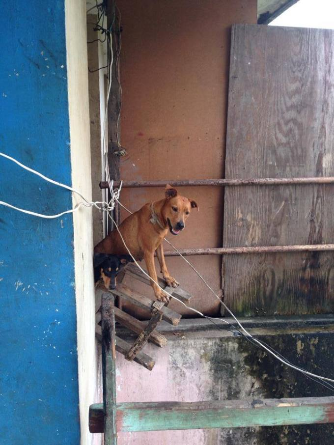 Dogs, Coco Solo, Colon, Panama
