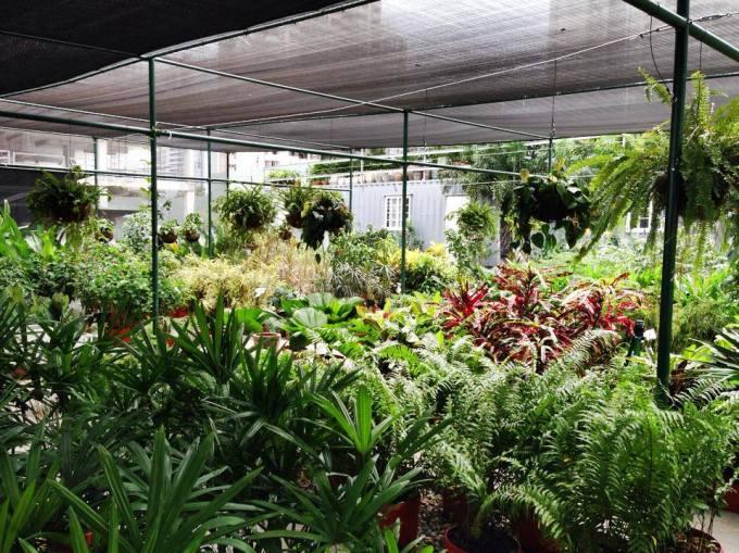 urban gardening panama